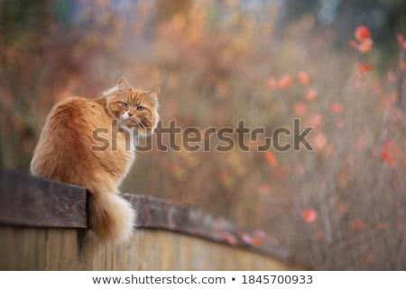 kedi · çit · ahşap · gözler · arka · plan - stok fotoğraf © zebra-finch