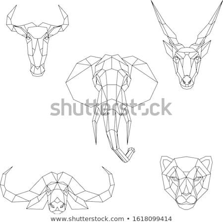 éléphant · Voyage · modèle · vecteur · wallpaper - photo stock © ramonakaulitzki