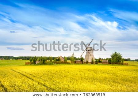 Wooden windmill in the field. Stock photo © borysshevchuk