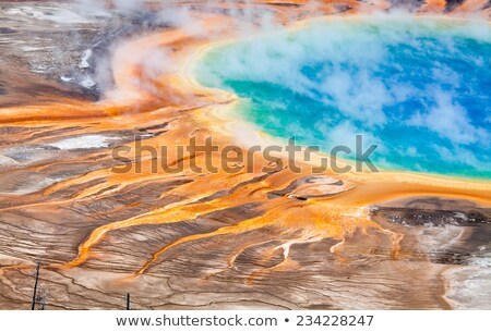 Dead forest in Yellowstone National Park Stock photo © CaptureLight