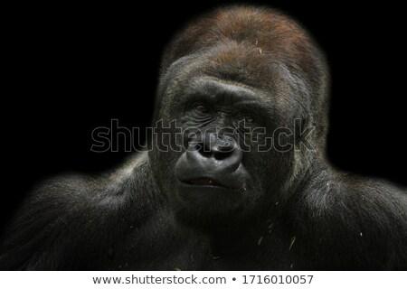 gorilla · seduta · albero · parco · animale · outdoor - foto d'archivio © freshinfo