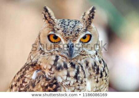 Oehoe portret vogel adelaar dierentuin Stockfoto © bradleyvdw