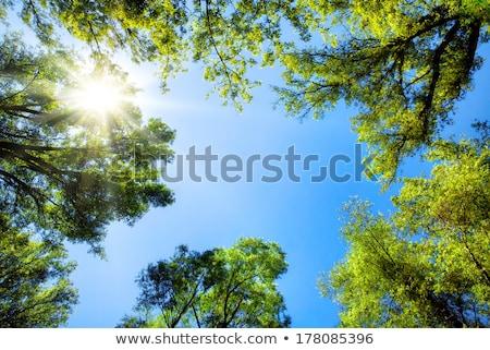 blue · sky · silêncio · céu · flor · primavera · pôr · do · sol - foto stock © meinzahn