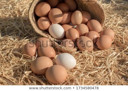 crudo · frescos · carne · salchichas · pollo · listo - foto stock © klinker