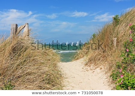 sandy path through dunes Stock photo © w20er