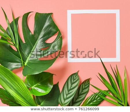 Flora message on leaves Stock photo © fuzzbones0
