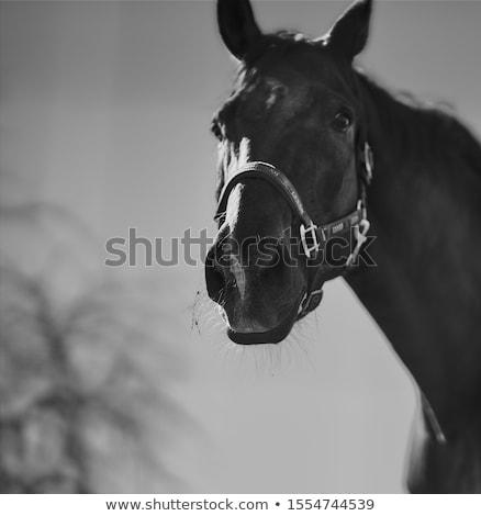 ló · barna · testtartás · este · nap · étel - stock fotó © byrdyak