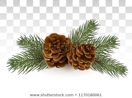 Christmas decoration with fir branches. EPS 10 Stock photo © beholdereye