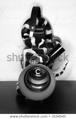 California Kingsnake on old movie camera. Stock photo © iofoto
