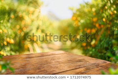 Background of orange trees. Stock photo © RAStudio