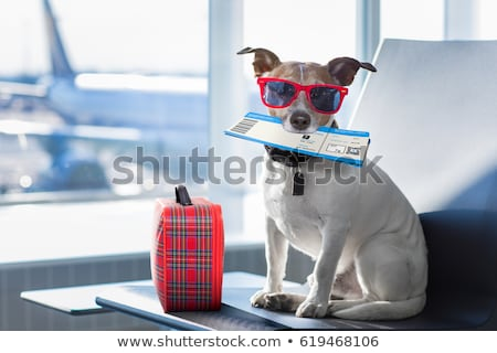 Funny dog with summer holiday luggage  Foto stock © marimorena