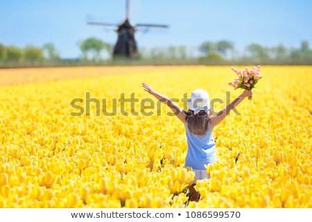 spring field with yellow tulip stock photo © meinzahn