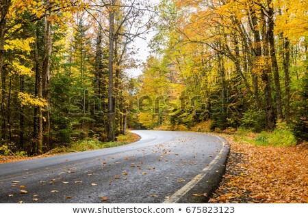 ősz esős út stilizált kaland utazás Stock fotó © tracer