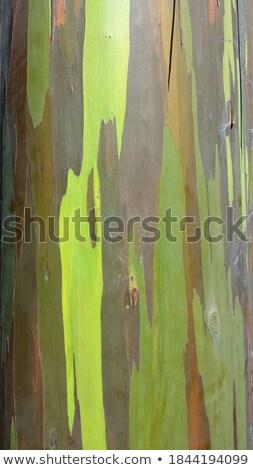Singapore · botanico · giardini · cielo · musica · albero - foto d'archivio © zambezi
