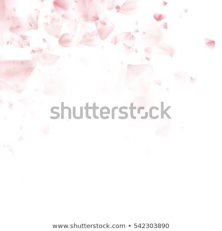 pembe · sakura · yaprakları · düşen · çiçek · vektör · romantik - stok fotoğraf © beholdereye