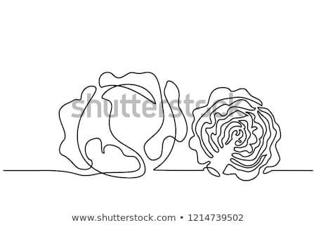 Estilizado repolho pintado branco natureza folha Foto stock © blackmoon979