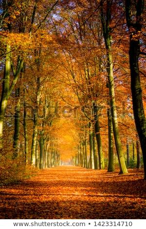 Autumn avenue Stock photo © IMaster