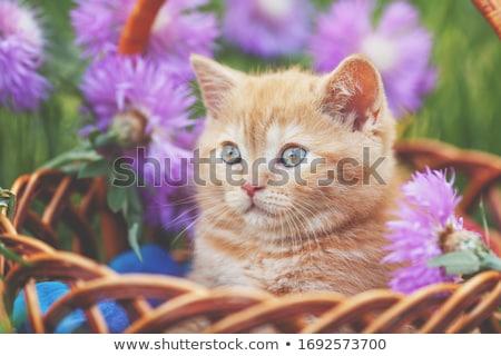 имбирь кошки корзины иллюстрация природы фон Сток-фото © bluering