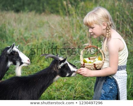 Lány etetés kecske kislány farm étel Stock fotó © FOTOYOU