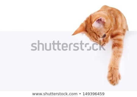 Foto stock: Gato · fuera · blanco · bebé · feliz · ojos