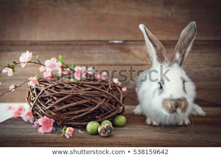 Nyulak ül fészek húsvét természet tájkép Stock fotó © Ustofre9