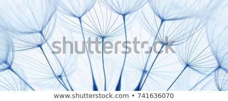 Natuurlijke paardebloem abstract voorjaar gras licht Stockfoto © zven0