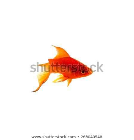 silhouette · épée · poissons · blanche · mer · signe - photo stock © robuart
