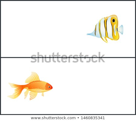 Butterfly and Gold Fish Landing Page with Text Stock photo © robuart