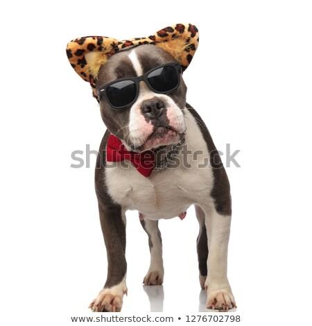 úriember amerikai visel napszemüveg állat nyomtatott Stock fotó © feedough
