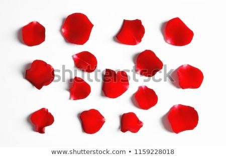 gyönyörű · piros · rózsa · szirmok · felső · kilátás · Valentin · nap - stock fotó © dash