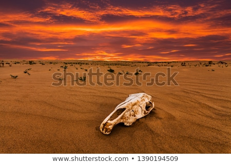 A desert with a dead animal Stock photo © colematt
