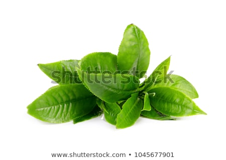 Stock photo: Green tea bud and fresh leaves. Tea plantations