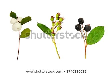 Сток-фото: коллекция · Ягоды · вишни · клубники · черника · малина