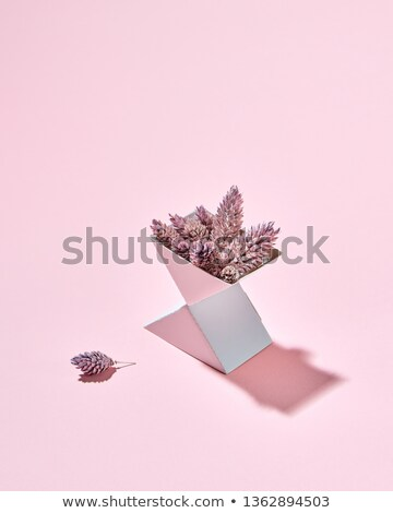 Pino cartón cuadro rosa espacio de la copia texto Foto stock © artjazz