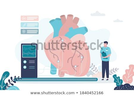 cardiocirculatory system diagram Stock photo © adrenalina