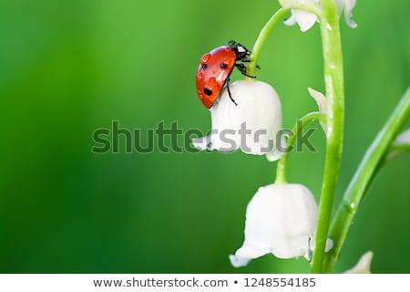 Scène planten insecten tuin illustratie bloem Stockfoto © bluering