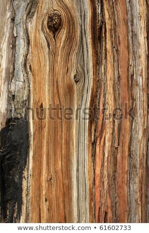 Pino corteza retrato primer plano imagen árbol Foto stock © saje
