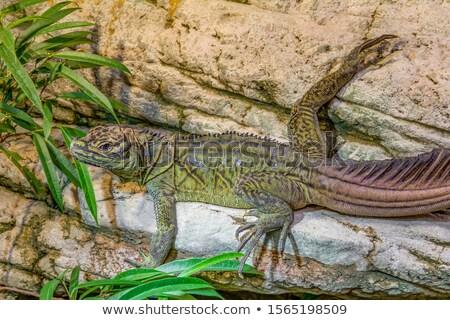 Gyík föld részlet barna sivatag biológia Stock fotó © prill