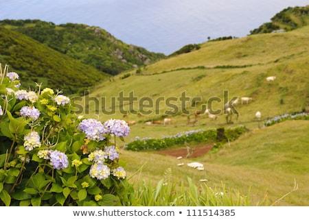 Paisaje verde isla cielo Foto stock © dinozzaver