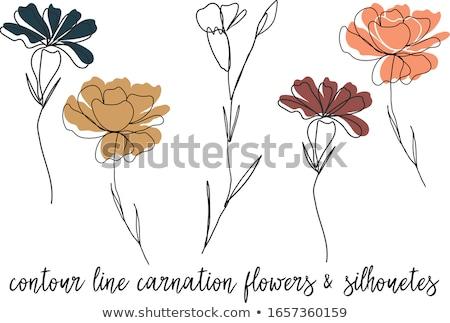 Szegfű virág virágoskert természet levél háttér Stock fotó © Roka