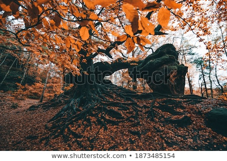 colored leafes in saxon switzerland stock photo © w20er