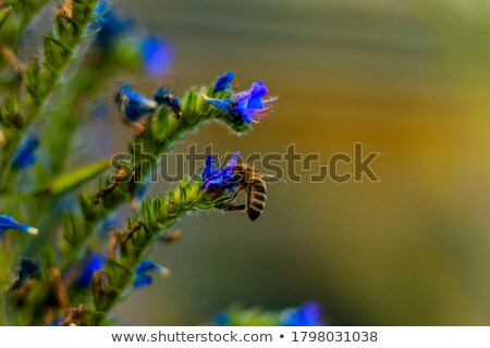 Bumble bee on the lila flower Stock photo © jancaj
