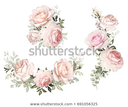 vintage rose background stock photo © annaomelchenko