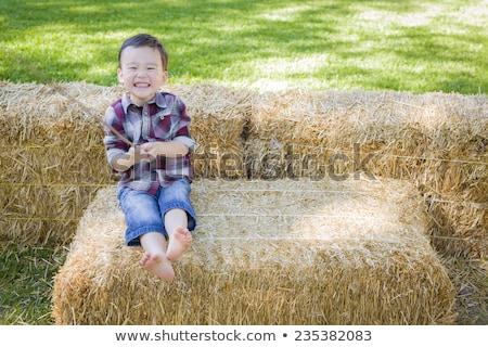 Cute · молодые · мальчика · сено - Сток-фото © feverpitch
