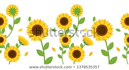 Sonnenblumen einfache isoliert weiß Blume Sommer Stock foto © Mr_Vector