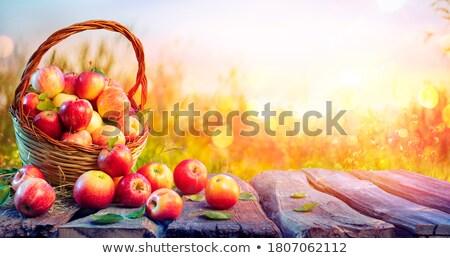 Fall defocused Stock photo © Koufax73