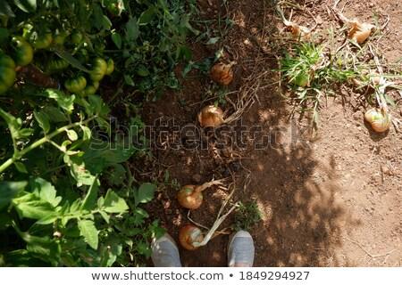 verde · coppia · strisce · sfondo · estate · sabbia - foto d'archivio © zhekos