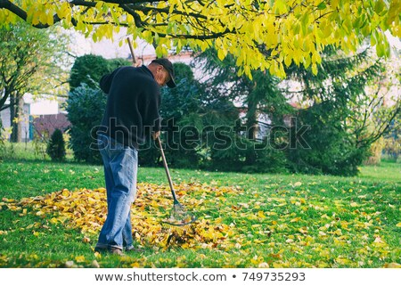 Czyszczenia parku spadek samochodu drzewo Zdjęcia stock © avq