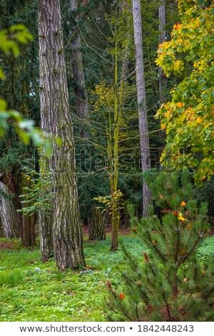 dense jungle with small creek Stock photo © meinzahn