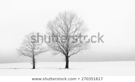 Two lonely trees in a winter landscape  Stock photo © CaptureLight